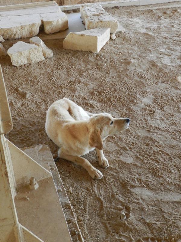 Hunde in Nemea