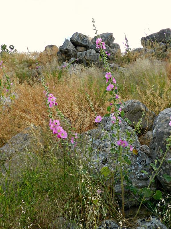 Tiryns Blumen